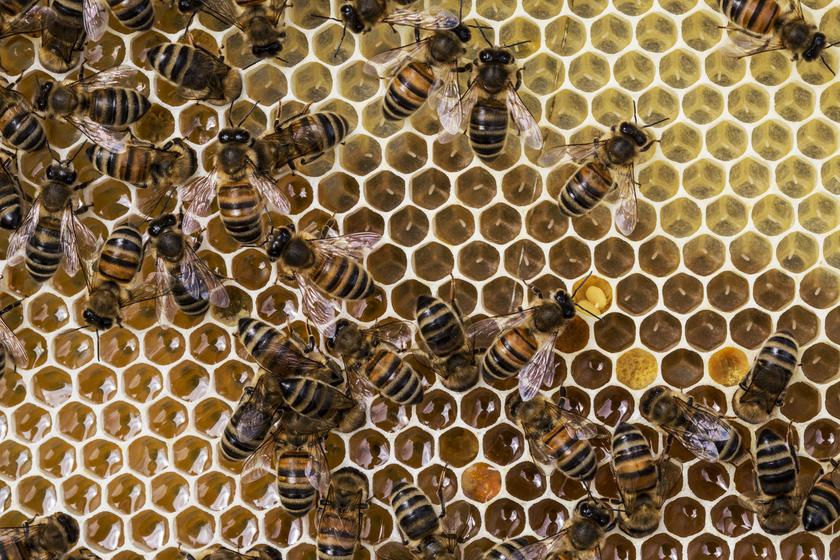 Arı Beslenmesinde Arı Sütü Ne İşe Yarar