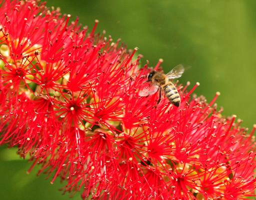 Bir Arı Efsanesi: Adım Adım Balın Hikayesi