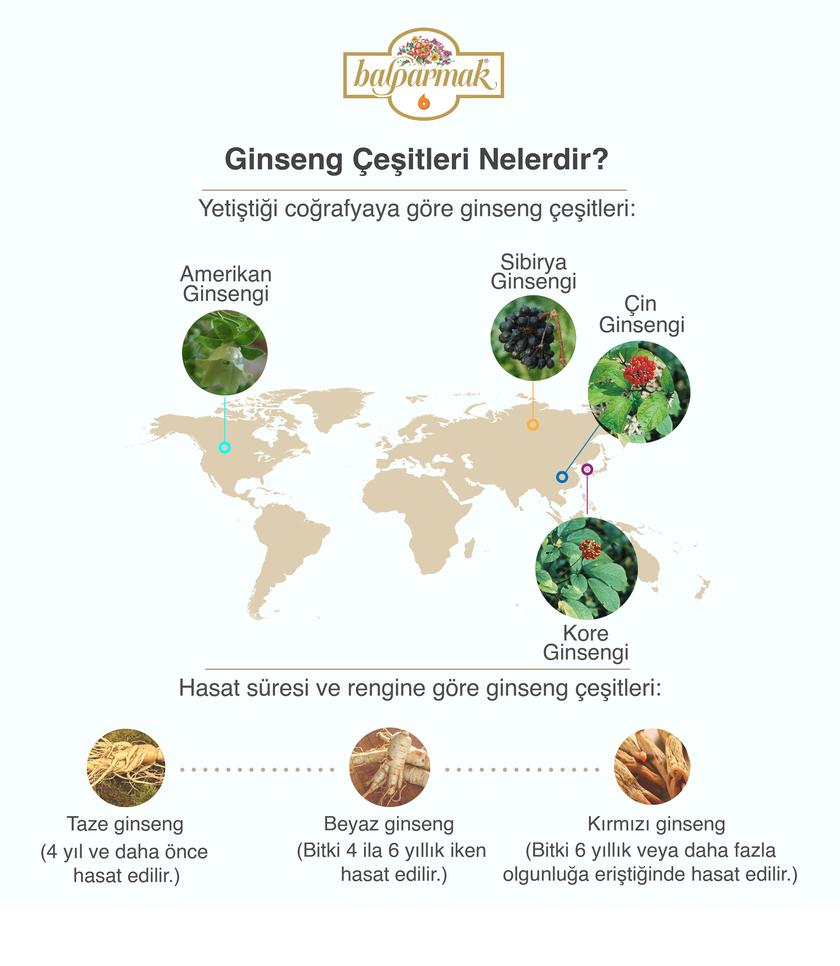 Ginseng Çeşitleri Nelerdir